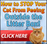 ad1 The Main 3 Reasons why does your cat peeing on couch suddenly