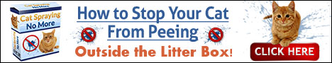 how to stop cats from peeing